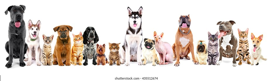 Group of sitting cats and dogs, isolated on white