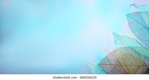 group of skeleton leaves on blured background, close up