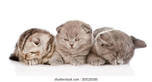 group of sleepy baby kittens. isolated on white background