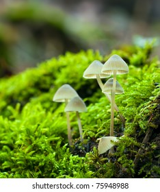 Group of small gorgeous mushrooms surrounded by green grass