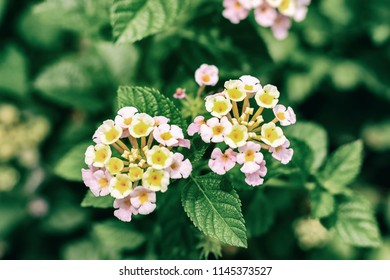 Group of small pink flower and green leaves. Film vintage filter