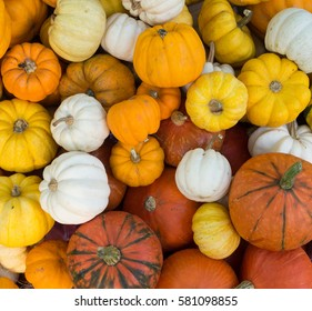 group of small pumpkins different color