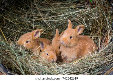 Group of small rabbits in hay