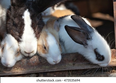 Group of small young rabbits in shed. Easter symbol