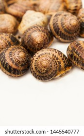 group of snails (Helix Aspersa Muller, Maxima) on a white background, inside shell, near the distance, nobody, several mollusks, vertically, brown, on top, space