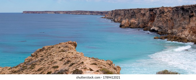 Group of southern right whales swimming in an area protected by the cliffs. Mothers and babies in the nursery area at winter time. Panoramic picture. Nullarbor, Head of Bight, Australia