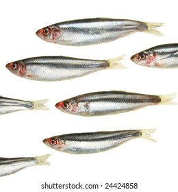 A group of sprat fish appear to swim in and out of the frame