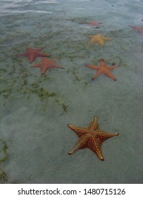 Group of starfish under water on a sandy beach.