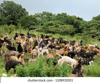 group of stray dogs herd in costa rica big rescue reserve for  dogs for adoption on the outdoor forest mountain  animal pet care
