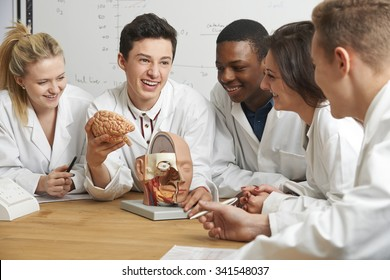 Group Of Students Looking At Model Brain In Biology Class