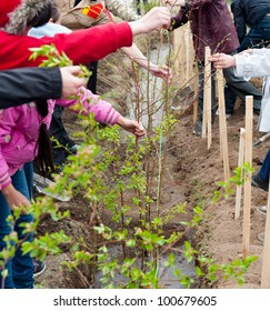a group of students plant young trees in a yard