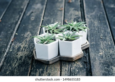 Group of succulent in mini white hexagon houseplant on dirty wooden table