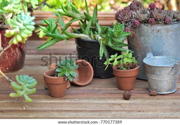 Group Succulent Plants Pot On Wooden Royalty Free Stock Image