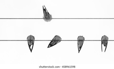 group of swallows on wires with a swallow on the opposite side with respect to the other