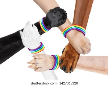 group or team of hand shaking dog animal paws with lgbt rainbow gay arm wrist band flag , isolated on white background