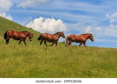 Grupo de tres caballos adultos marrones en la montaña verde