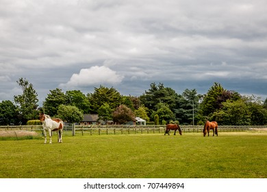 Group of three horses enjoying in a meadow of a pretty farm on a cloudy day, UK