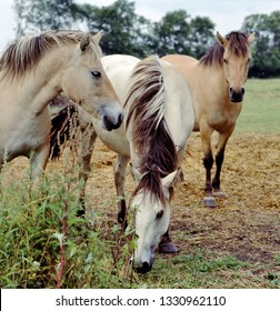 Group of three horses together on pasture