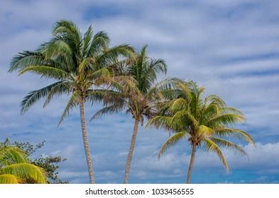 matag coconut