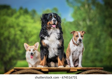 Group of three trained dogs in summer