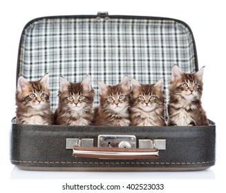 group tiny kittens in the bag. isolated on white background