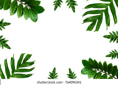 group of topical leaf background