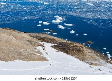 Group of tourists climb on the mountain, Antarctica