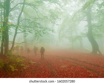 Group of tourists going into the distance along the footpath covered with fallen leaves in beech forest in early autumn in heavy fog