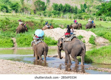 Group tourists to ride on an elephant in forest at Chiang mai,thailand