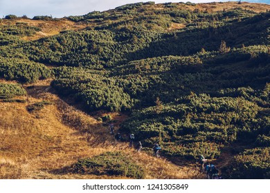 Group of tourists walking up the hills with backpacks.Hikers explore beautiful green highlands in Europe.Beautiful mountain landscape in autumn.Instagram vintage film filter