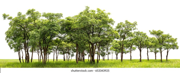 Group of tree at the green meadow isolated on white