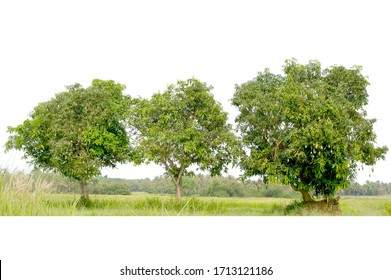 Group of tree isolated on white