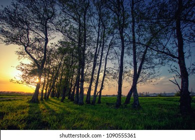 A group of trees during a golden sunset