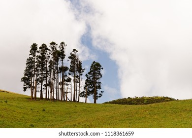 Group of trees in a green meadow in a hilly landscape, in the sky clouds with gap - Location: Azores, Island Sao Jorge