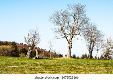 Group of trees in mountains during spring