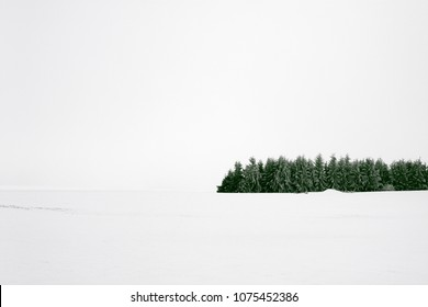 Group of trees in winter snow