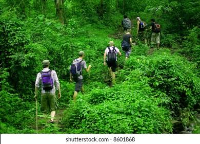 Group of trekkers hike through lush green jungle