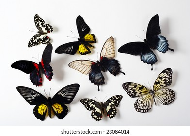 A group of tropical butterflies on white background