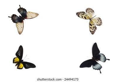 A group of tropical butterflies on white