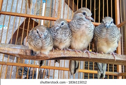 a group of turtledoves in a cage