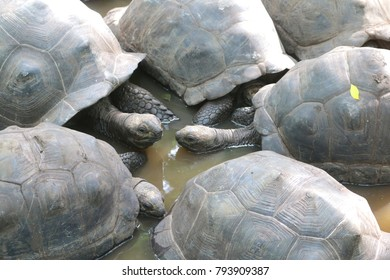 Group of turtles in the water