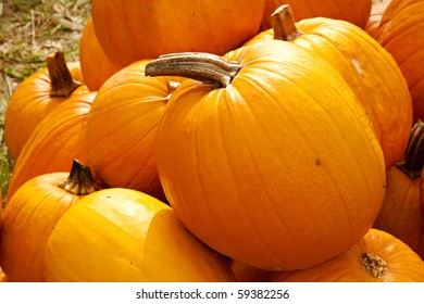 A group of two types of Halloween fall autumn pumpkins on a green grass background.