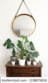 Group of various Monstera and cactus plants on a wooden table with a round mirror hanging on a leather strap in front of a white wall.