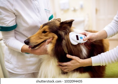 Group of veterinarian chech chip at dog's neck and reading information