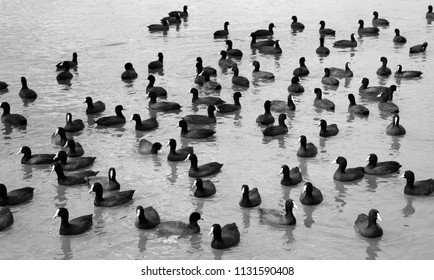 Group of waterbirds at Clyde Lake, Australia