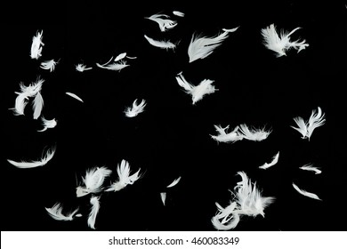 Group of white bird feathers falling down over black background