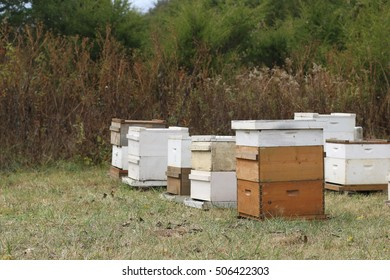Group Of White Painted And Natural Wood Beehives Containing Thousands Of Female Worker Honey Bees And One Queen In Open Pasture Field On A Farm In The Mountains of South West Virginia