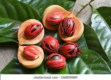 Group of whole organic Nutmeg seeds, Kerala India. spices known as manisan pala in Indonesia and red mace from tree Myristica fragrans in Banda Islands Moluccas Spice Islands. Has medicinal value.