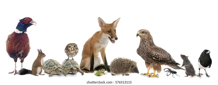 group of wild animals in Europe in front of white background