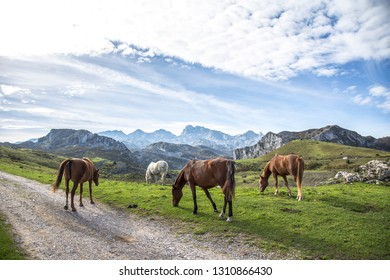 A group of wild horses in the lakes of Covadonga, Asturias